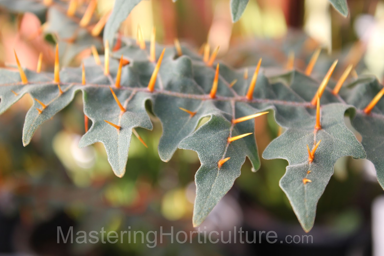 Mastering Horticulture: HortiCOOLture - Armored Plant on