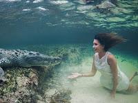 Aksi Ekstrem Model Cantik Menyelam Bersama Buaya