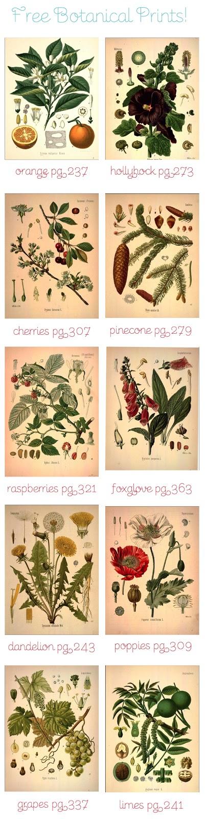 Lámina vintage de botánica para descargar