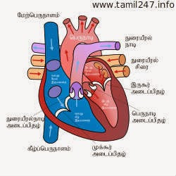 Idhay noi thagavalgal, irudhaya kolaru, Heart problems in tamil