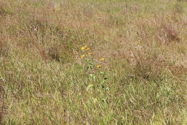 early August field