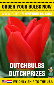Order Dutch Flower Bulbs