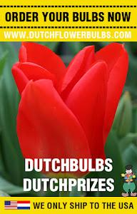 Order Dutch Flower Bulbs
