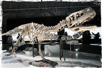 Dinosaur skeleton on display