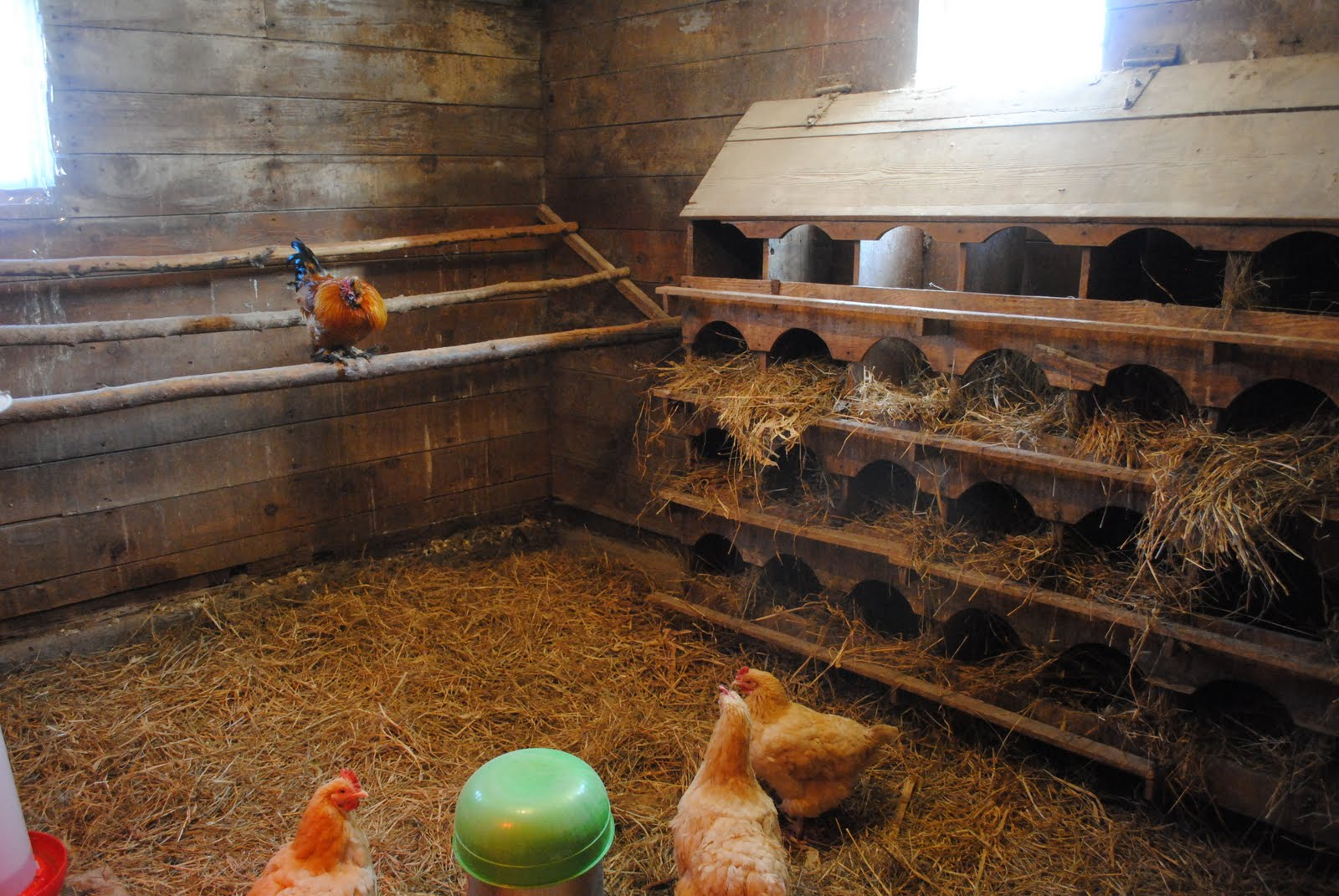 Chicken Coop Plans For 50 Chickens All About Chicken Coop 2017 Ideas. How To Build A Chicken Coop For 20 Chickens Build Your Own