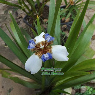 planta folhagem ornamental com flor