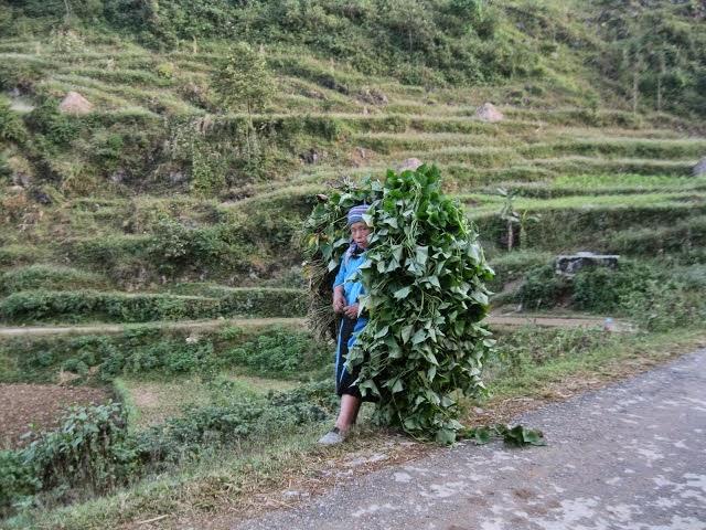 Dân nghèo Quảng Ngãi và ông Bí thư Tỉnh ủy Nguyễn Hòa Bình