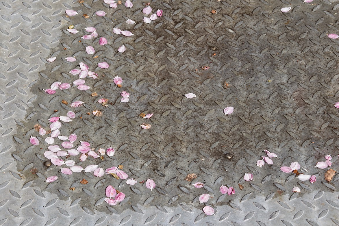 pink petals on iron