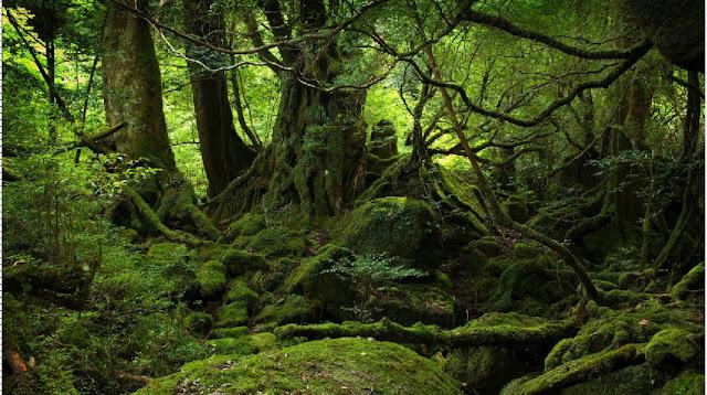 background hutan yang nantinya digunakan