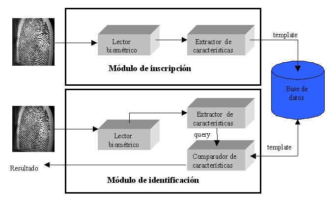 Sistemas Biometricos de Identificacion un Sistema Biom Trico Para