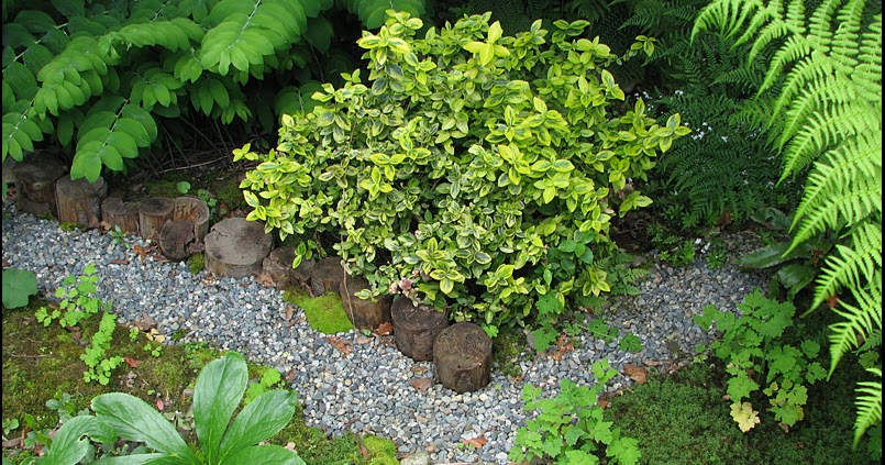 Shade plants under deck : My garden shade