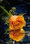 Esta flor é para saldar sua visita em meu blog :