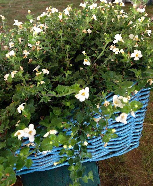 vintage_blue_wicker_file_basket_planter_garden