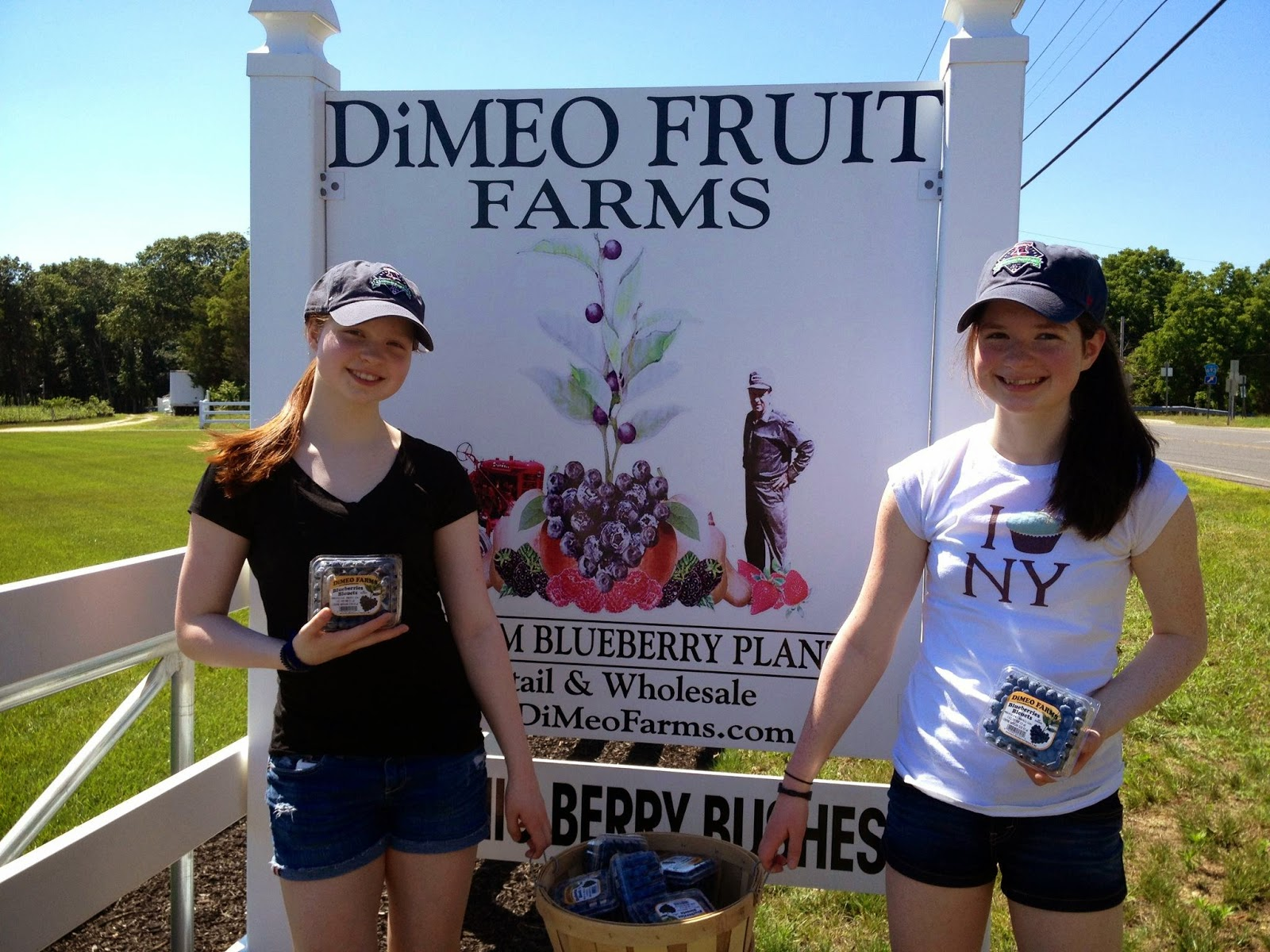 Blueberry Plants For Dimeo Farms Nurseries 609 561 5905