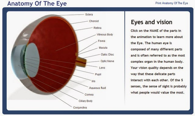 http://www.lensshopper.com/flash/eye-anatomy/index.swf