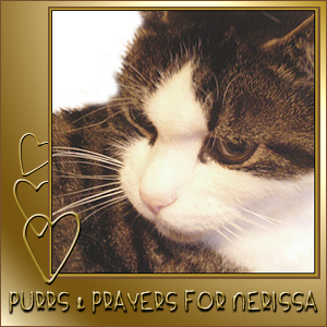 Purring for Nerissa