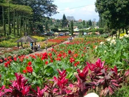 Keindahan taman bunga di selecta Malang