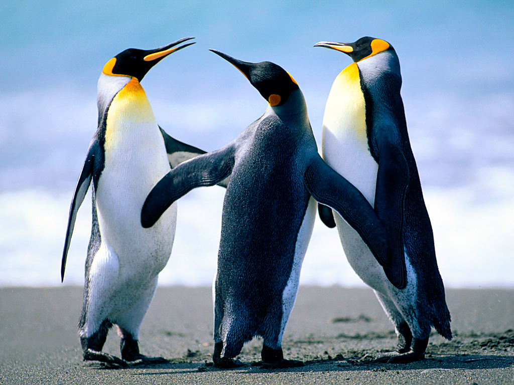 penguins showing parental togetherness