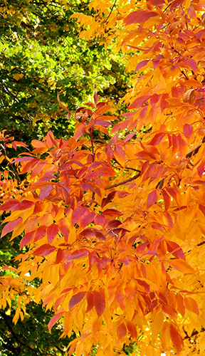 Yellow, Red, and Green Foliage