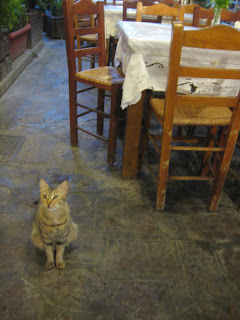 A hungry cat begging for some seafood at our restaurant.
