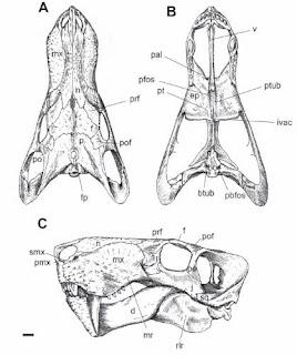 therapsida del Permico Inostrancebia