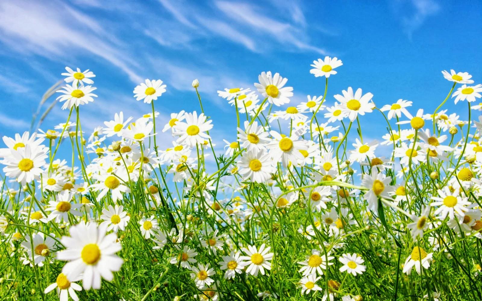 50 Gambar Bunga dan Tanamah Hias Terindah di Dunia (GAMBAR