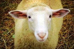 Δήμος Ορεστίδος: Συμπληρωματική Ενίσχυση Κτηνοτροφων Αιγοπροβάτων και Βοοειδών Κρεοπαραγωγικής Κατεύθυνσης