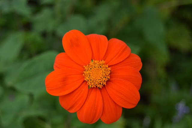 Flower and garden dahlia flower in different colors for What makes flowers different colors