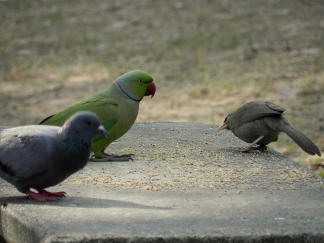 Birding in Delhi