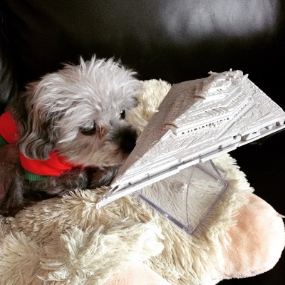 Murchie lays on a fuzzy white pillow as he sniffs a Star Destroyer perched beside him. The Star Destroyer is a solid grey diamond-shaped spaceship on a clear plastic stand. Murchie wears a red t-shirt with green grim.