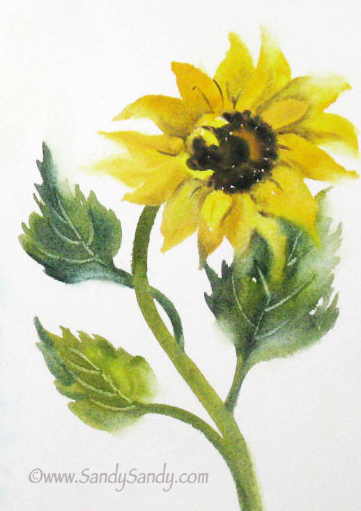 Gallery For gt Simple Sunflower Pencil Sketch