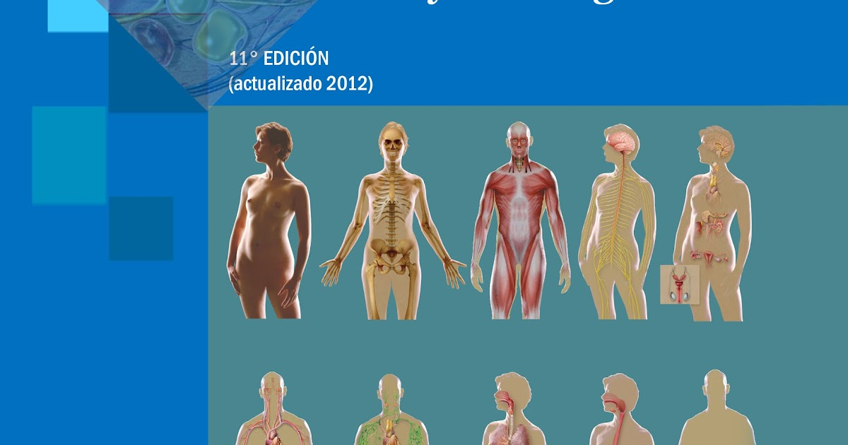 Moderno Fundamentos De La Anatomía Y La Fisiología 11 Edición Ideas ...