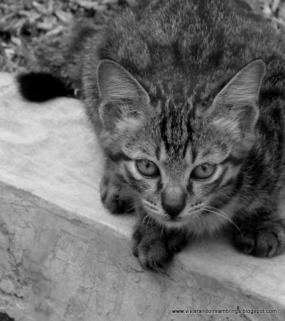 black and white photo of a cat using a bridge camera
