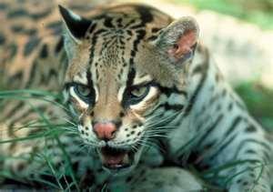 Pachamama Spectrum of Treasures: Ecuador's Spectacular Wildlife