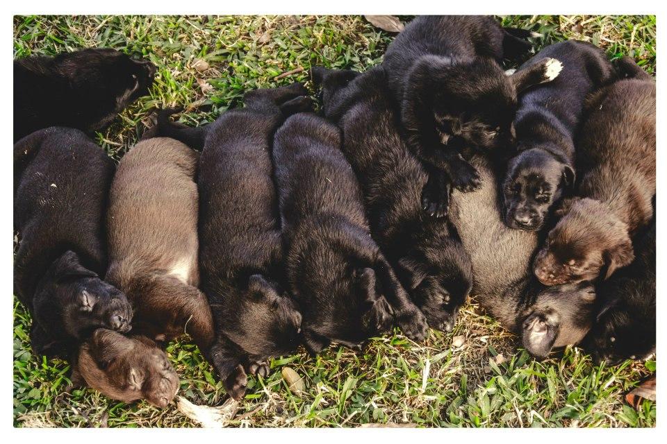 Blog de Perros Miniaturas: Adopción Cachorritos Marzo 2013-Buenos ...