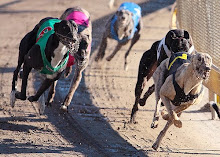 Order a DVD of your greyhound's races from Trackside