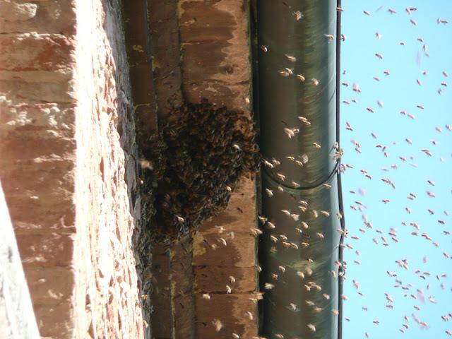 Sciame di api, alveare