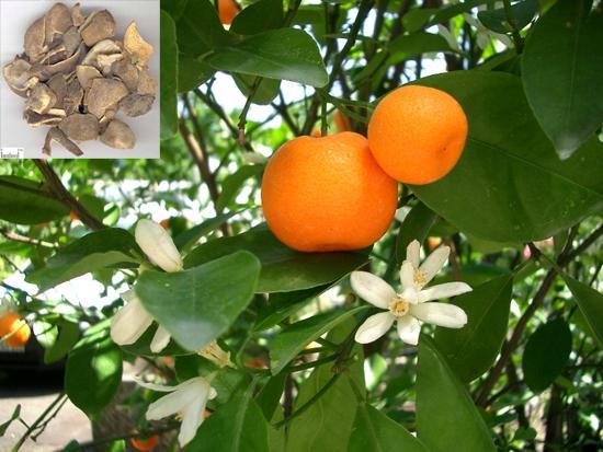 Citrus reticulata Blanco (Fam. Rutaceae)