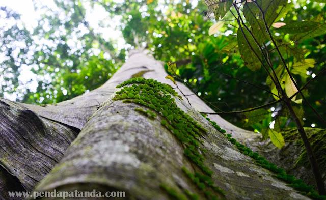 Hutan Lipur Bukit Mertajam tempat menarik