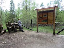 Im Nationalpark Bayerischer Wald im Juni 2013