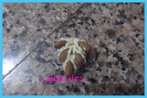 حلاوي مغربية باللوز للعيد 2013   5