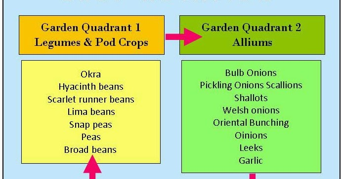 Durham council of garden clubs vegetable crop rotation for Soil 2 year pgdm