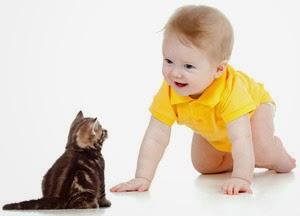 Cat dander allergy in children