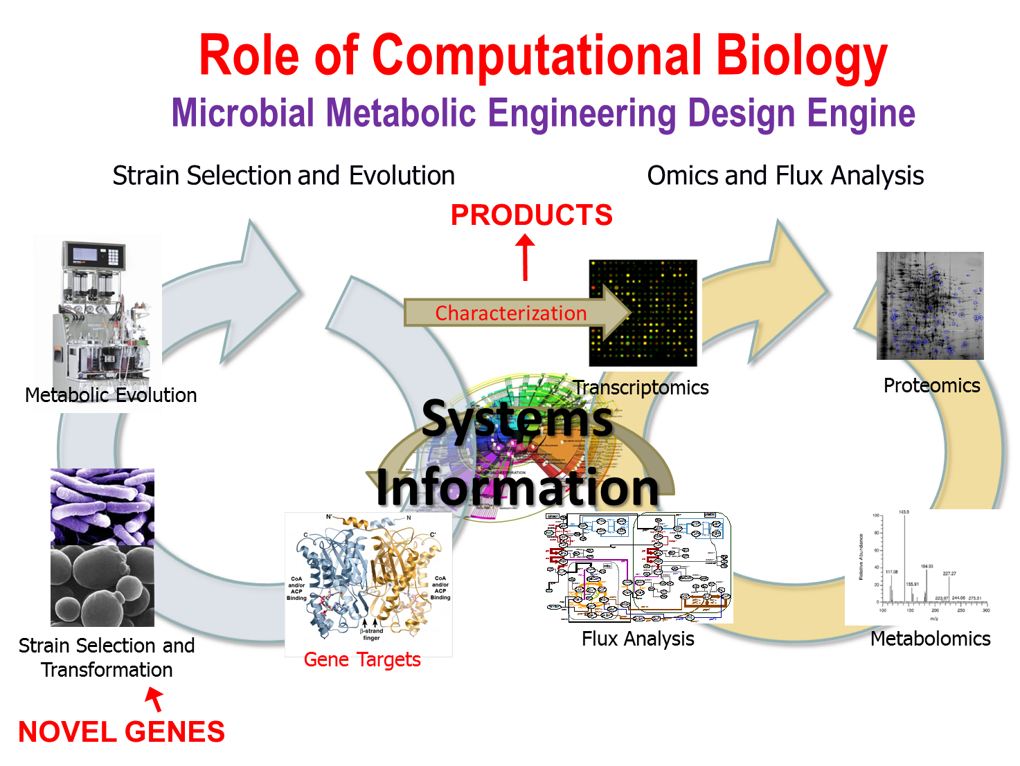 thesis systems biology The physiology, biophysics and systems biology nrsa from the national institute on drug abuse to continue work on his thesis project in the lab of dr.