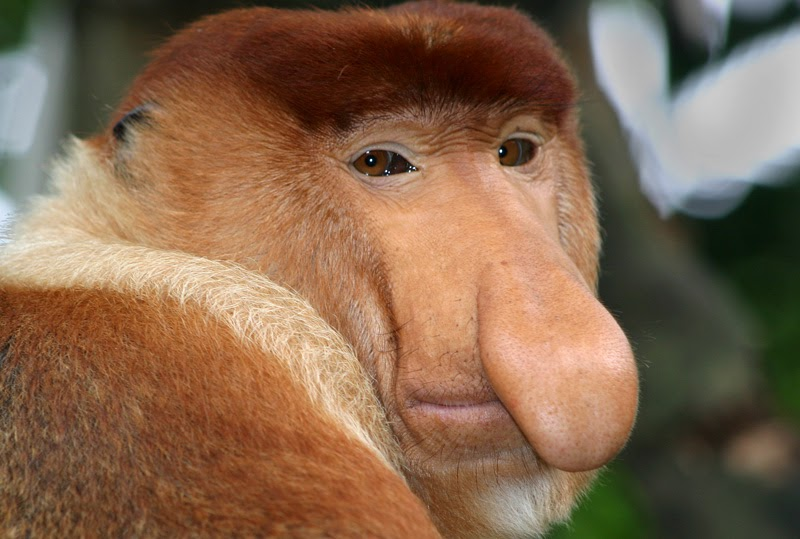 Zoo News Digest: New Monkey Species For Apenheul Primate Park