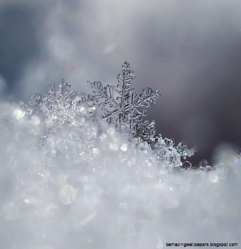 1000 ideas about Real Snowflakes on Pinterest  Snowflake Photos