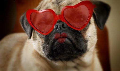 dog talk 101: valentine's day dog hug, Ideas