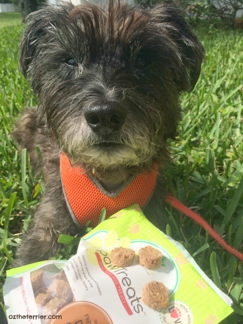 pawTree pawTreats are wholesome and all-natural
