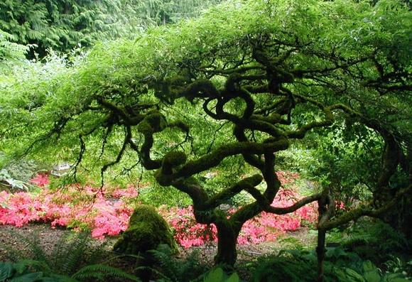fotos de um jardim lindo:as cinco zonas principais são jardim mediterrâneo jardim das rosas
