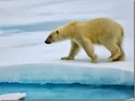 Помогите белому медведю (он-лайн игра)